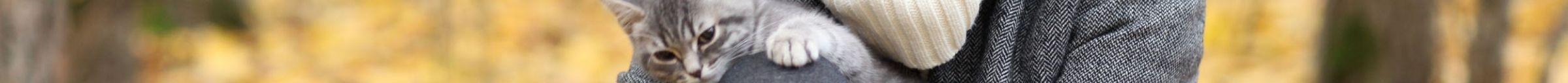 kintone ポータル スペース カバー画像(猫シリーズ)134