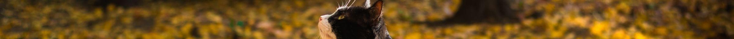 kintone ポータル スペース カバー画像(猫シリーズ)135