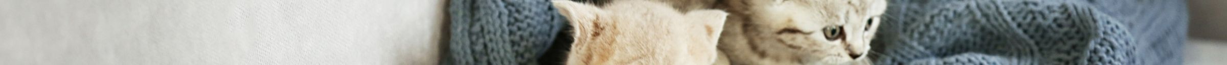 kintone ポータル スペース カバー画像(猫シリーズ)136