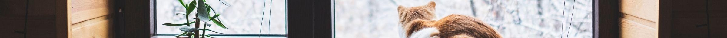kintone ポータル スペース カバー画像(猫シリーズ)138