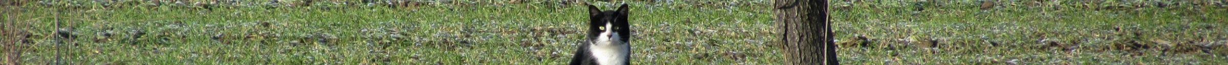 kintone ポータル スペース カバー画像(猫シリーズ)140