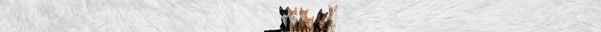 kintone ポータル スペース カバー画像(猫シリーズ)142