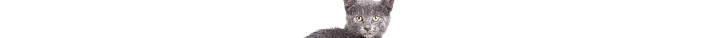 kintone ポータル スペース カバー画像(猫シリーズ)143