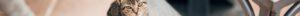 kintone ポータル スペース カバー画像(猫シリーズ)145