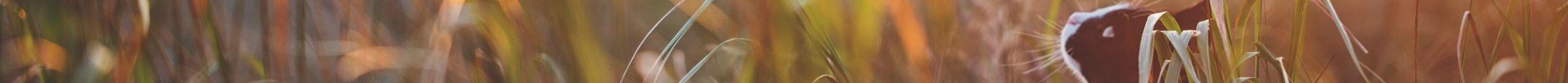 kintone ポータル スペース カバー画像(猫シリーズ)146