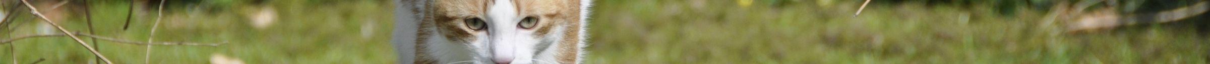 kintone ポータル スペース カバー画像(猫シリーズ)147