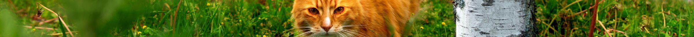 kintone ポータル スペース カバー画像(猫シリーズ)150