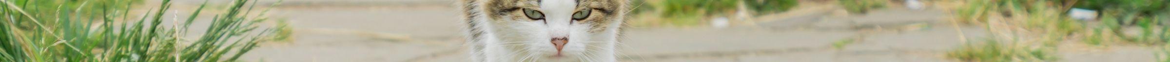 kintone ポータル スペース カバー画像(猫シリーズ)153