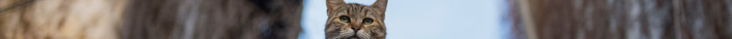 kintone ポータル スペース カバー画像(猫シリーズ)155